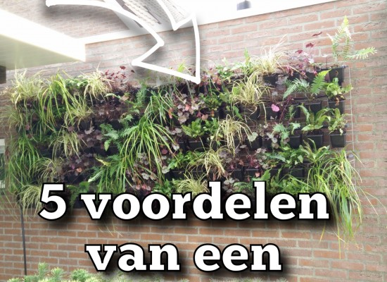 5 voordelen verticale tuin