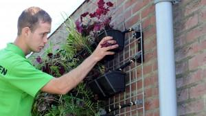 Gevelplanten.com plaatst een plantenmuur frame - Gevelplanten.com