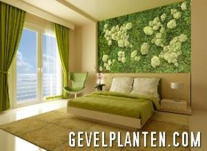 Groene muur decoratie in uw bedkamer - Gevelplanten.com