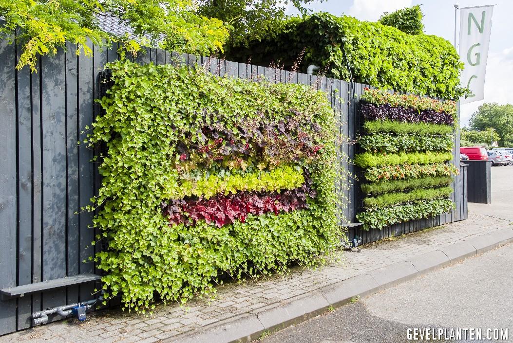 Gevel planten aan schutting for Verticale tuin systeem