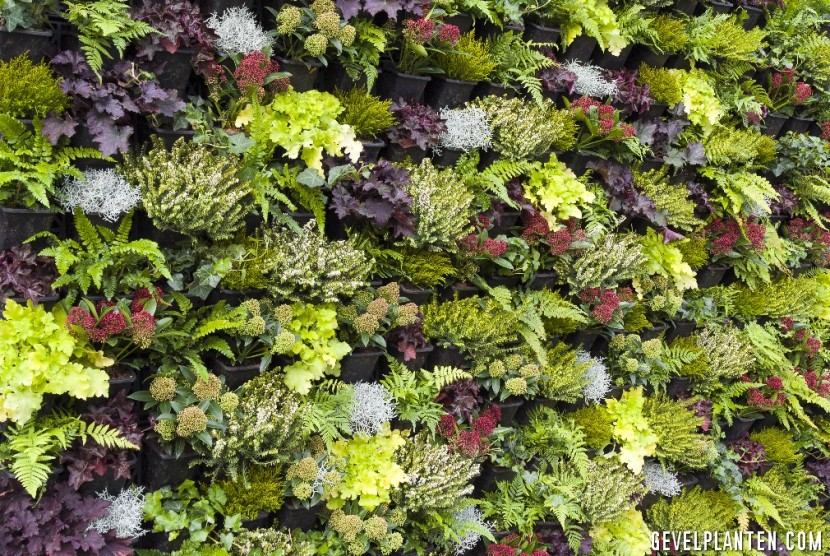 gevel planten diversen soorten