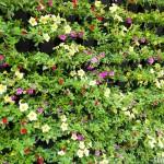 gevel planten diversen soorten met bloem