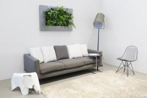 Livingwall als wanddecoratie in uw woonkamer door Gevelplanten.com