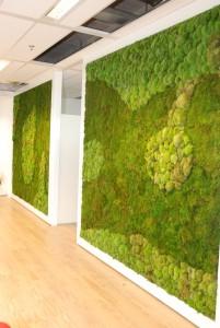 Moss Art van Gevelplanten.com