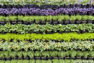 planten diverse soorten per rij